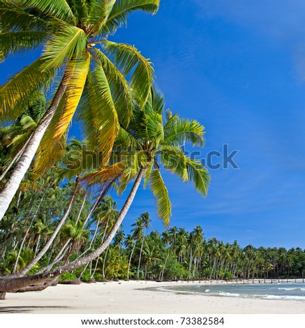 Palm beach with white sand near the sea under blue sky - stock photo
