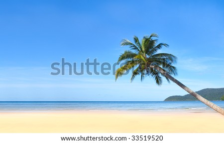 Palm bend on the water - stock photo