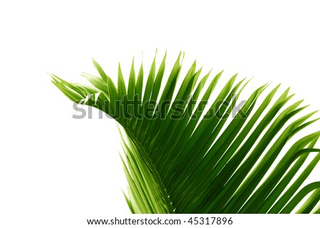 palm branch - stock photo
