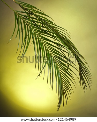 Palm branches on the colorful background - stock photo