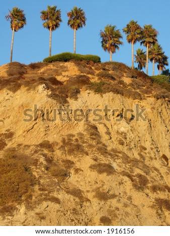 Palm Cliff in Laguna Beach, California - stock photo
