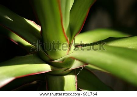 Palm Close up - stock photo