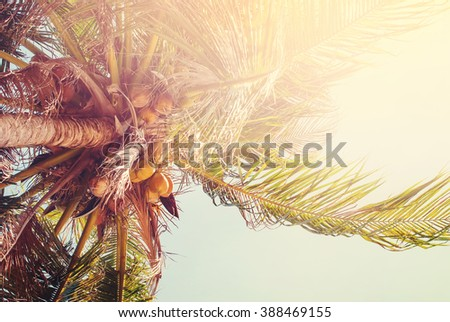 Palm Coconut Trees Sunlight Thailand Heat Tropical Landscape Holiday Background Effect Toned