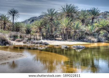Palm forest and beautiful golden beach at Vai, Crete, a popular summer tourist attraction on the island with natural forests of the Cretan date palm , Phoenix theophrasti - stock photo