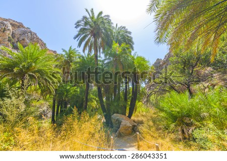 Palm forest in Preveli, Crete, Greece