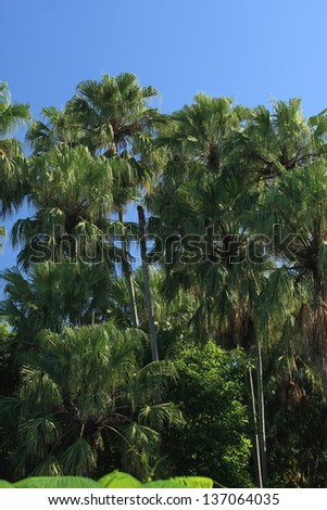palm forest in Thailand