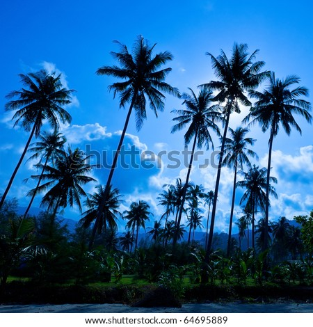 Palm forest silhouettes on blue sky - stock photo