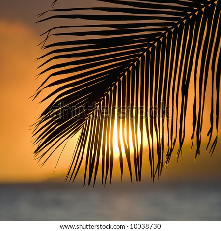 Palm frond at sunset over ocean and Maui, Hawaii. - stock photo