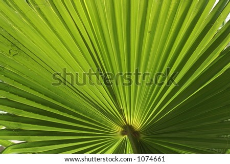 Palm Frond in the Sunlight - stock photo