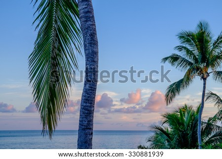 Palm fronds and trees at sunrise taken on the seven mile bridge in the Florida keys - stock photo