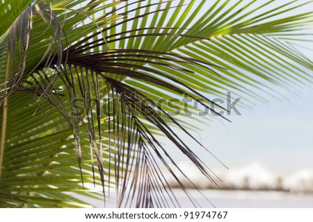 Palm fronds at beach in Costa Rica - Punta Leona, Puntarenas province, Central Pacific Coast, Costa Rica - stock photo