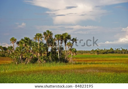 Palm Hammock, Big Cypress National Preserve, Florida Everglades - stock photo