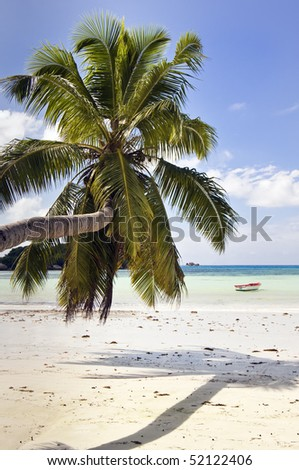 Palm hang over sand at  wonderful  Cote de Or beach on Praslin island, the second largest island of the Seychelles archipelago - stock photo