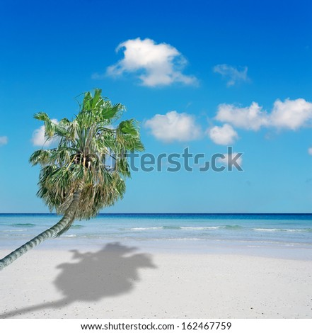 palm in a beach with white sand under a blue sky - stock photo