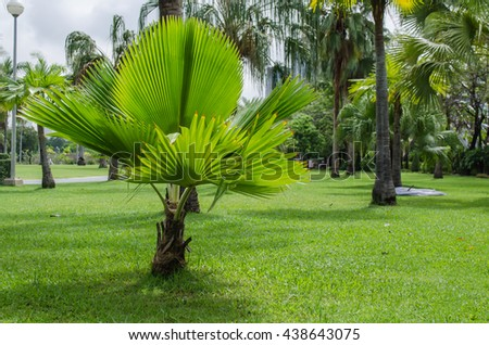 Palm in park is nature background - stock photo