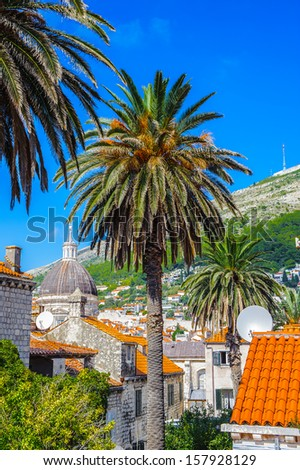 Palm in the Old City of Dubrovnik (Croatia) - stock photo