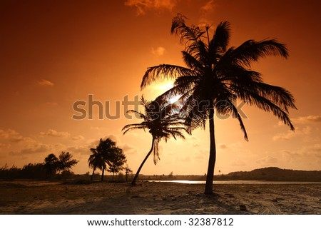palm in yellow sunrise - stock photo