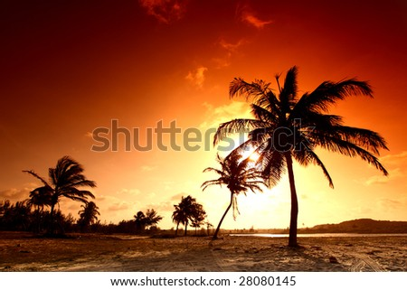 palm in yellow sunrise sky - stock photo