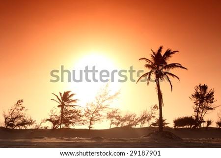 palm in yellow sunrise sky - stock photo