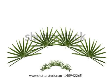 palm leaf - stock photo