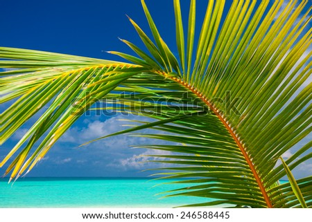 Palm leaf against blue sky with sea and tropical beach - stock photo