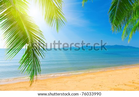 Palm leaf and tropical beach - stock photo