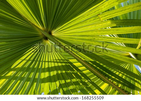 Palm leaf back light.
