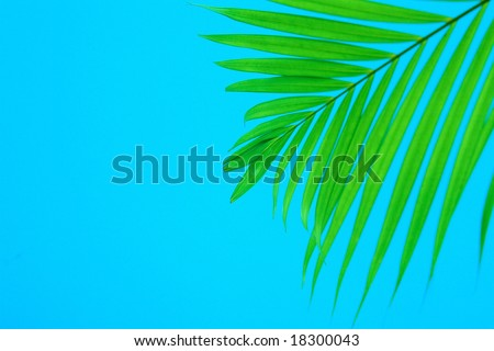 Palm leaf blowing against the wind on blue background - stock photo