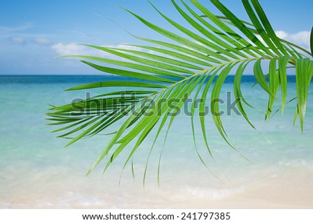 Palm leaf, blue sea and tropical white sand beach ander the sun - stock photo