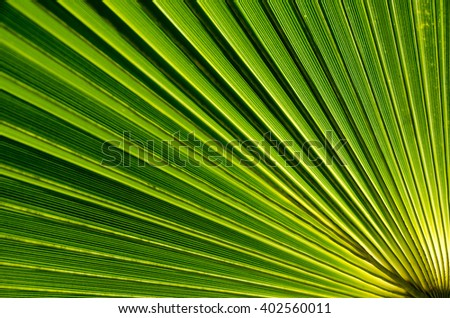 Palm leaf close-up. Natural background. - stock photo