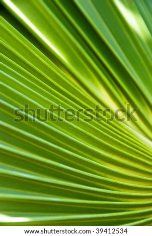 palm leaf closeup - stock photo