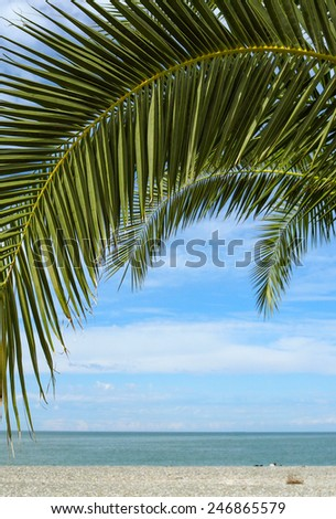 Palm leaf closeup with seaside view on horizon. Tropical beach - sea landscape for your concept exotic tours on the island. - stock photo