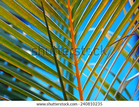 Palm leaf detail                  - stock photo