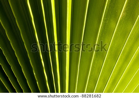 palm leaf in green - stock photo