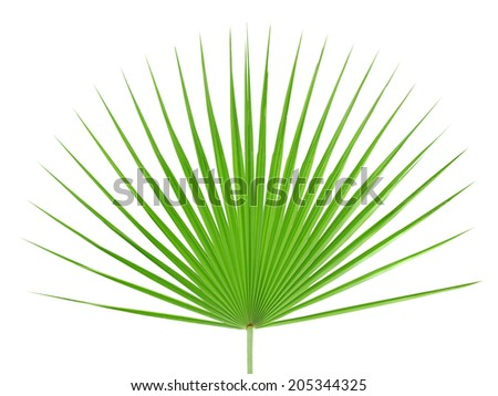 Palm leaf isolated on white background - stock photo