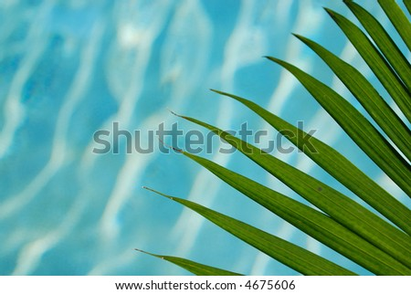 palm leaf over sparkling blue pool water - stock photo