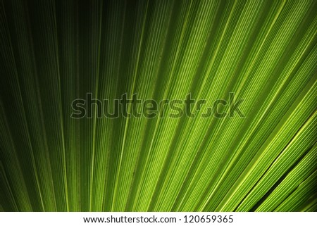 Palm leaf pattern floral texture background - stock photo
