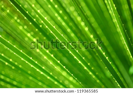 Palm leaf texture, macro - stock photo