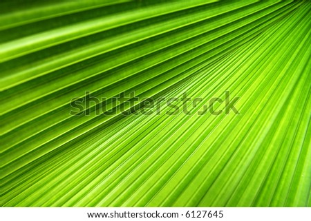 Palm leaf with a strong diagonal through the frame - stock photo