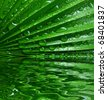 palm leaf with drops - stock photo