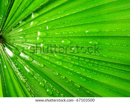 palm leaf with water drops - stock photo