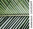 Palm Leave green line composition - stock photo