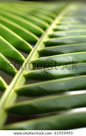 Palm Leave 