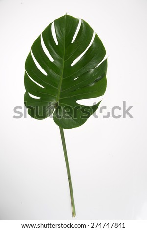Palm Leaves - stock photo