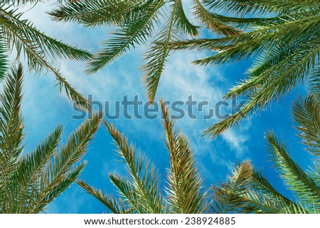 palm leaves against the sky in summer. - stock photo