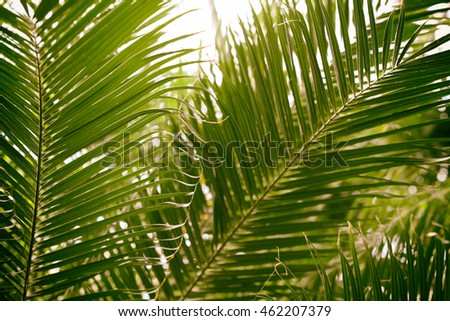 Palm leaves in botanical garden