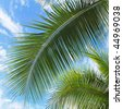 Palm leaves in front of blue sky with white clouds - stock photo