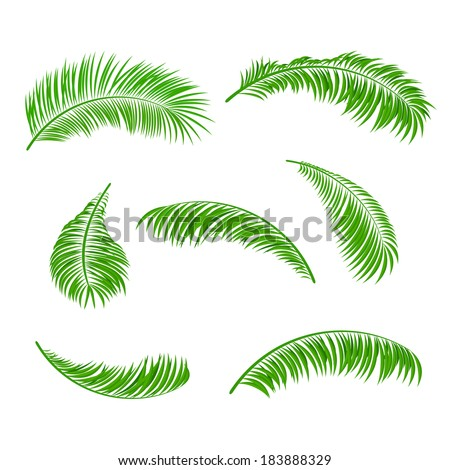 Palm leaves isolated on a white background, illustration. - stock photo