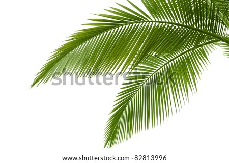 Go Back gt; Gallery For gt; Palm Leaves Png