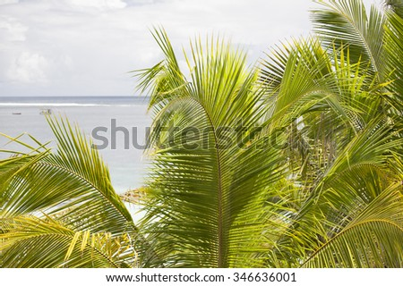 Palm leaves on a tropical beach. Shooting on the island of Mauritius, Indian Ocean. - stock photo